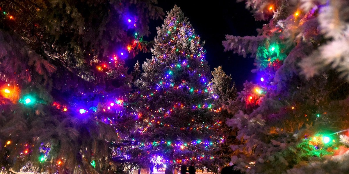 Image of illuminated trees for the holidays in Berthoud, Colorado