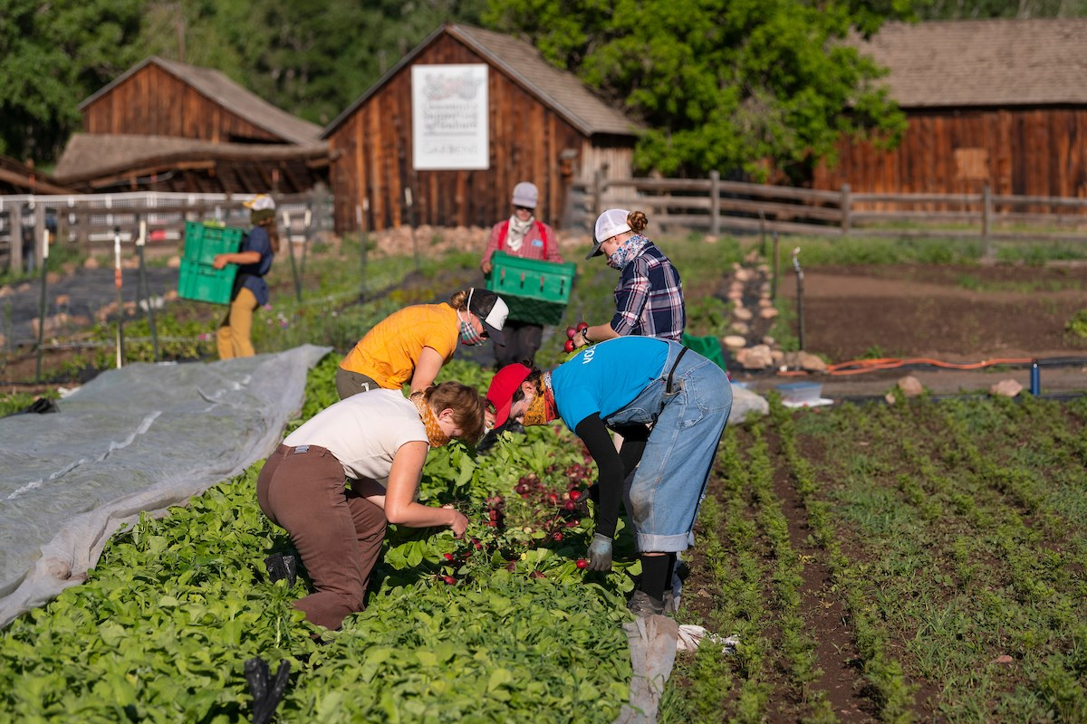Image of people working at the Denver Botanic Garden's Chatfield Farm