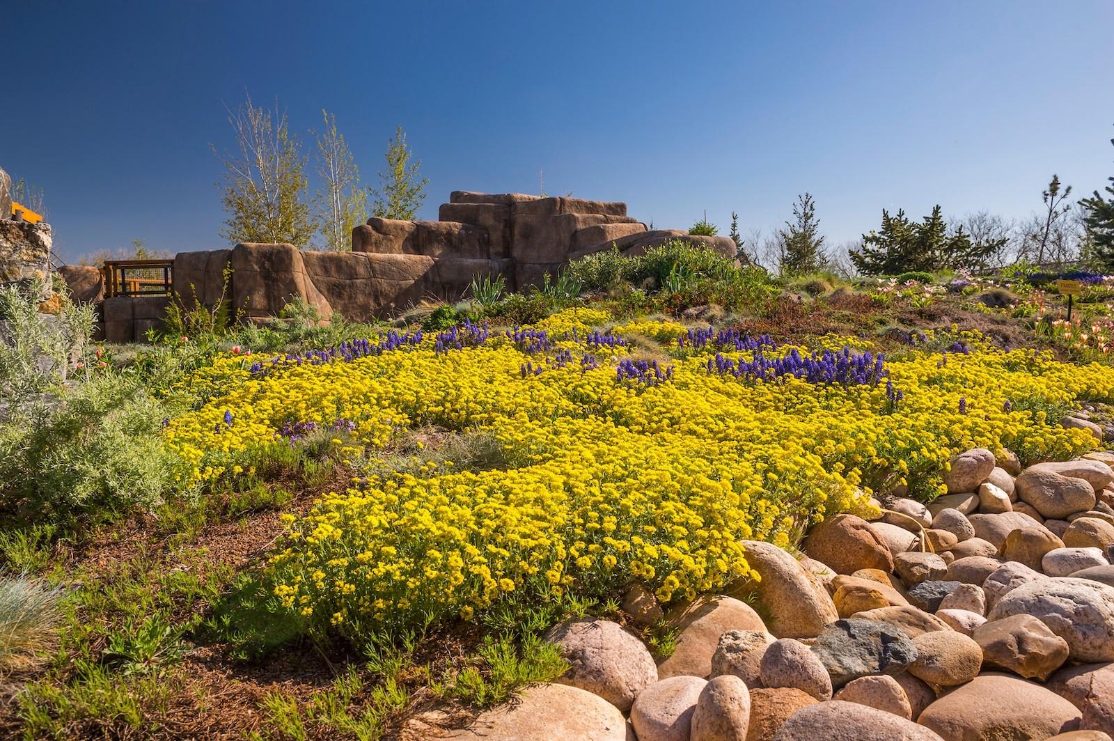 Image of flowers at the Denver Botanic Gardens