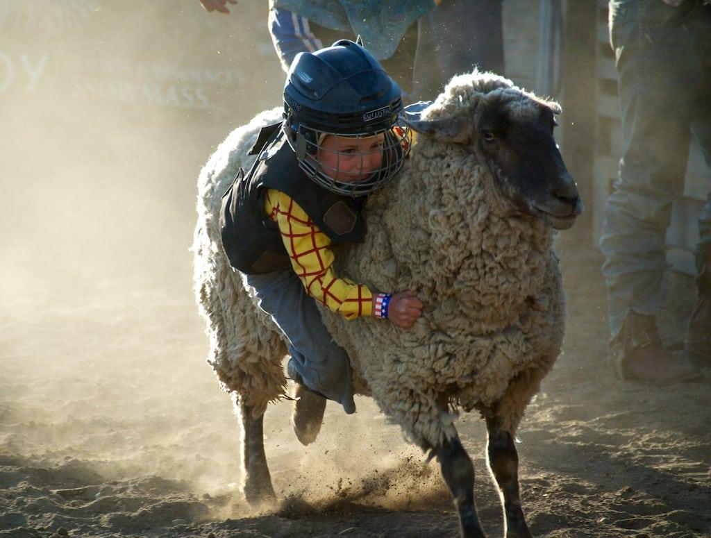 Gambar seorang anak mengendarai domba di rodeo massa salju