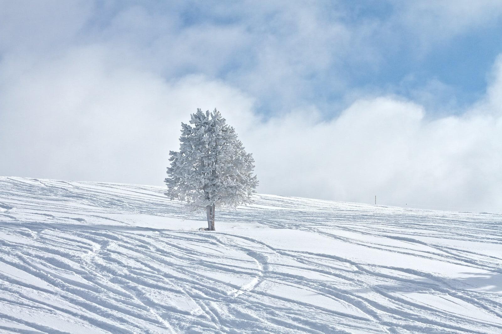 Gambar salju halus di Vail, Colorado